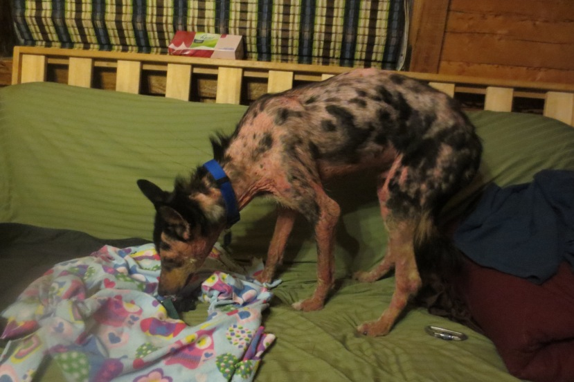2 - first night at home 3-14-2015