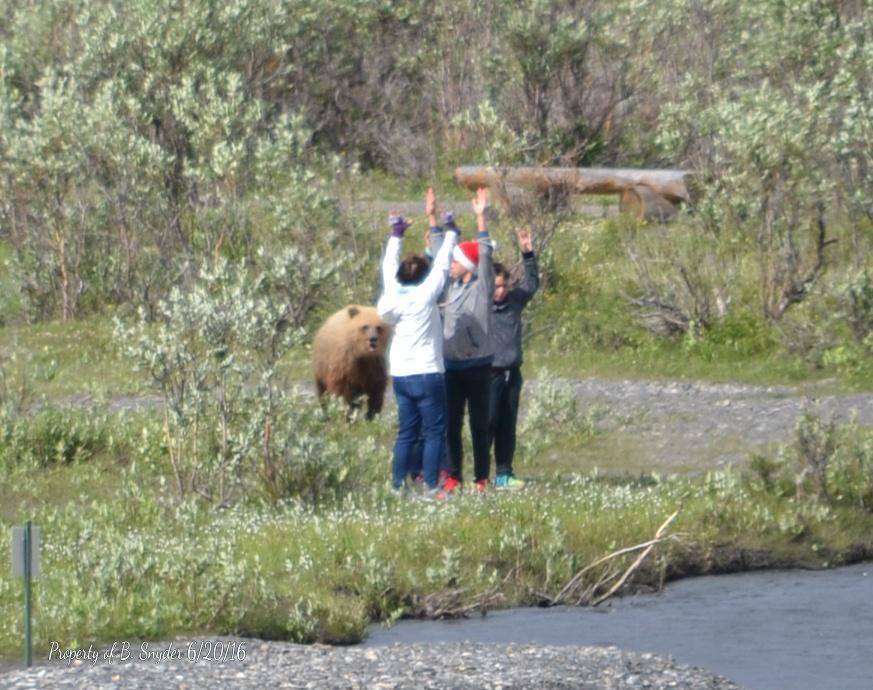 Optima Red Top >> Bear maulings peak – Craig Medred