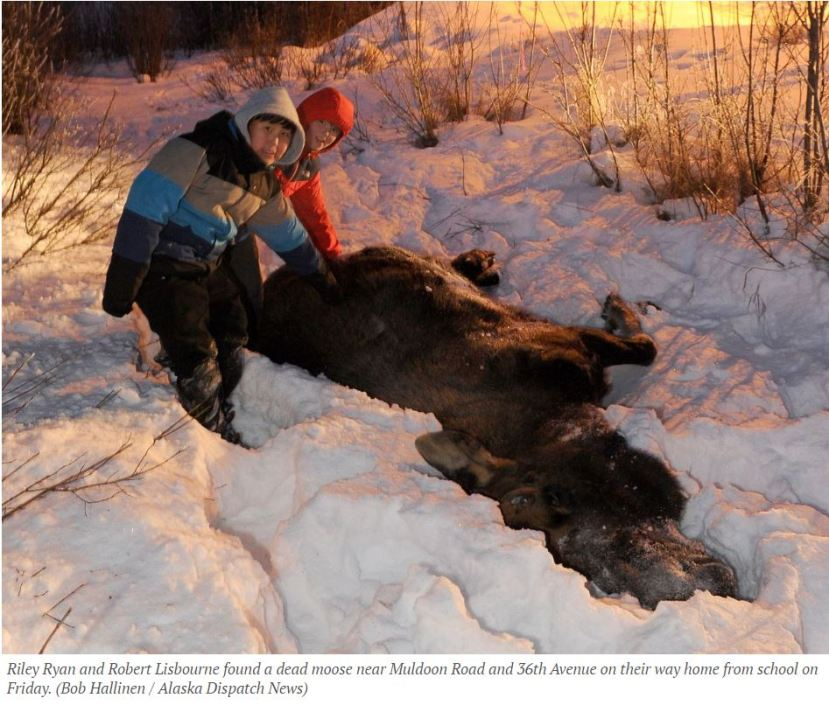 adn-moose