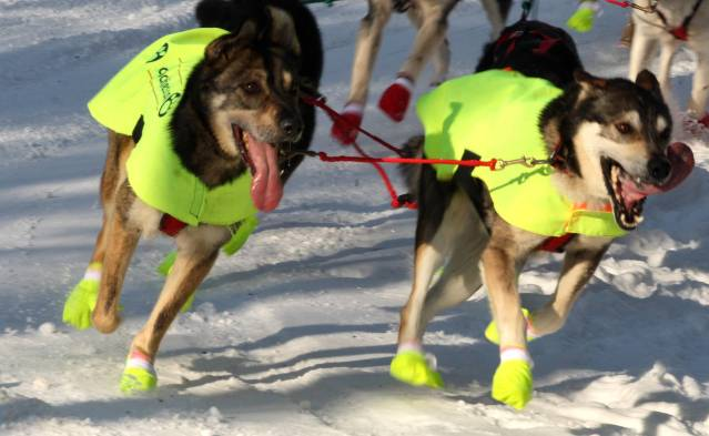 iditarod_dogs_in_style