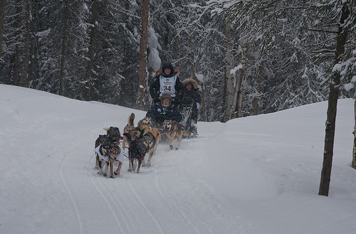 Dallas_Seavey_2012_Iditarod_Champion