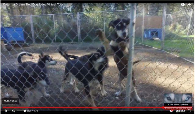 vern's puppies